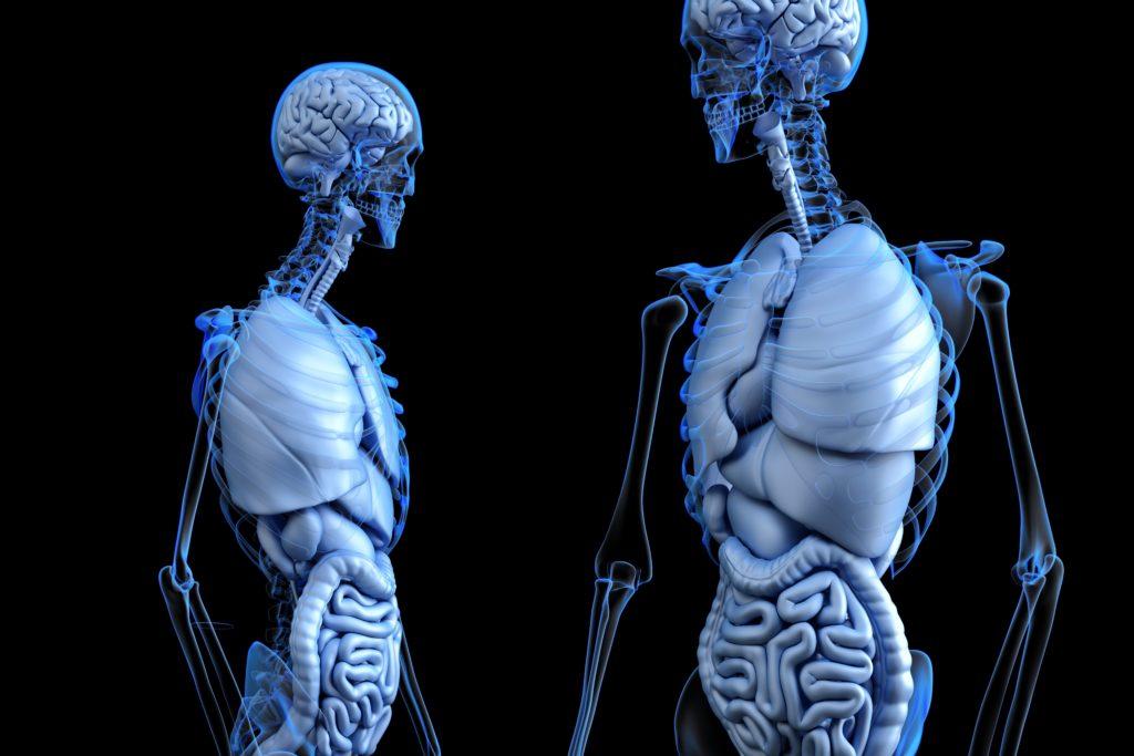 Diferentes tejidos del cuerpo humano